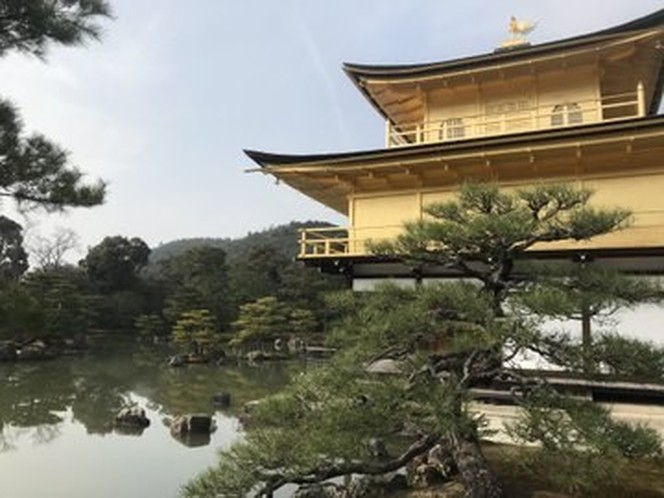 A multi-tiered shrine overlooks the twisted branches of a tree by the side of a lake.